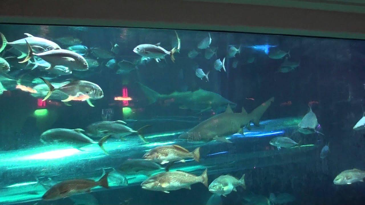 Shark Tank Golden Nugget Water Slide