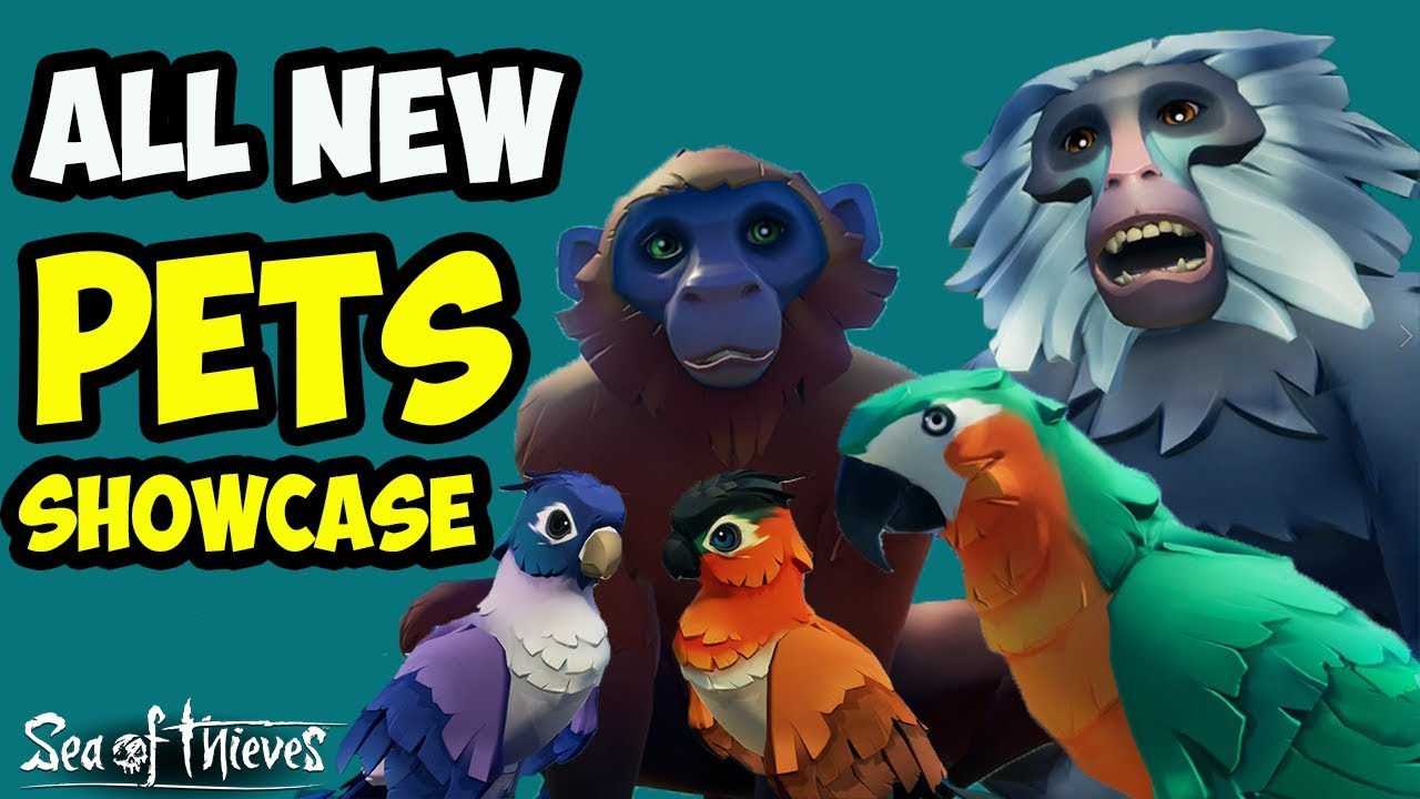 Sea Of Thieves All The New Different Pets Shown Ingame Showcase Youtube