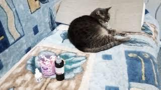 Как почистить ушки кошке в домашних условиях, часть 1