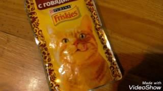 чем я кормлю свою кошечку?!?!!?обзор на много кормов