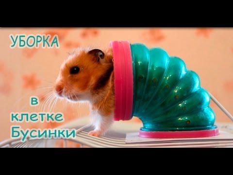 видео: Уборка в клетке у Бусинки. how to clean a hamster cage