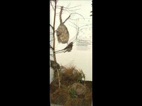 Разнообразие птичьих гнезд
