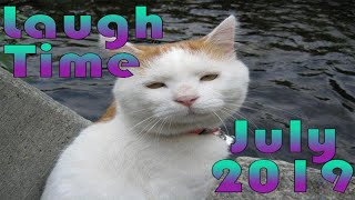 15 минут ОТБОРНЫХ ПРИКОЛОВ СМЕШНЫЕ ЖИВОТНЫЕ Июль 2019 Laugh Time1