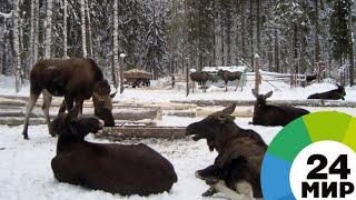 «Заповедный спецназ»: как бороться с браконьерами - МИР 24