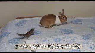 토끼와 다람쥐의 서열싸움