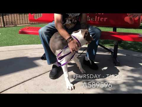 Dog & Joe Sho - #Fursday - Thor - A589596