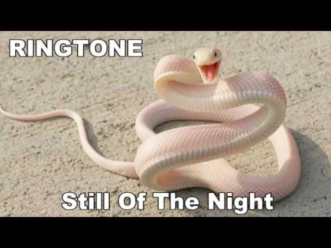 RINGTONE Still Of The Night