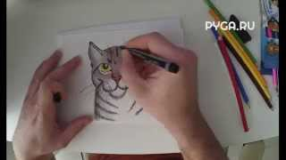 Как нарисовать реалистичную кошку карандашом поэтапно [Видеоурок]