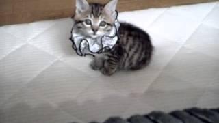 旦那が子猫を拾ってきたw thumbnail