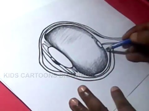 How To Draw Human Eye Anatomy Detailed Drawing For Kids Youtube