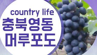 country life, 전원생활, 충북 영동군 , 시…