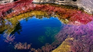 The most beautiful river on earth - Crystal Spout (Caño Cristales)