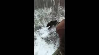Охота на медведя на берлоге.
