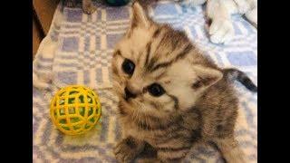 Котята 3 недели!Первые Поцелуи!!!