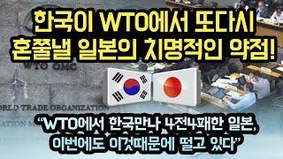 """한국이 WTO에서 일본을 다시 혼쭐내줄 치명적인 약점. """"일본이 WTO만 가면 떨수밖에 없는 이유"""""""
