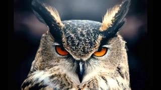 OWL СОВА ФОТО из инета Bruno Coulais   Winged Migration