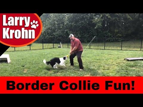 Border Collie Training Games