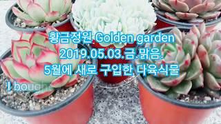 [황금정원  Golden daden, 다육식물 키우기 Succulent plant] #전자파차단다육이, 多肉…