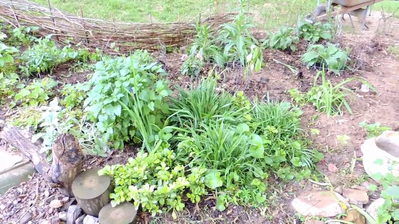 Making A Simple Wattle Fence For A Garden Border, Hopalong Hollowscaping
