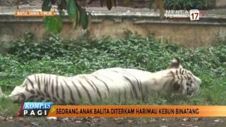 Download Mp3 Seorang Balita Diterkam Harimau Di Kebun Binatang