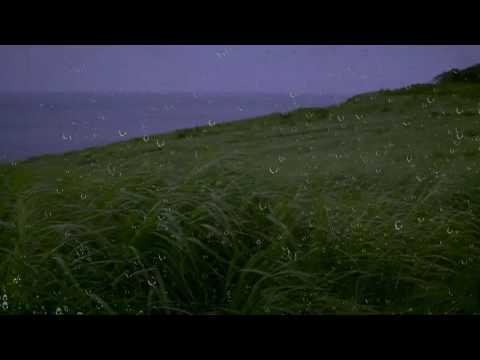 Rain & Wind Sounds for Sleep & Relaxation w/ Distant Thunder & Ocean Waves   Relaxing White Noise