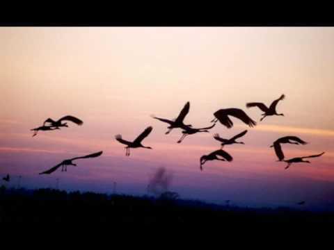 Tải Bài Hát Đêm Lao Xao- Lyrics(lời bài hát) - NguyễnHảiYến