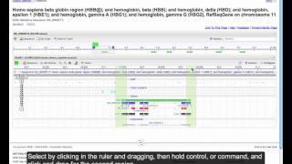 Sequence Viewer: Using Primer-BLAST