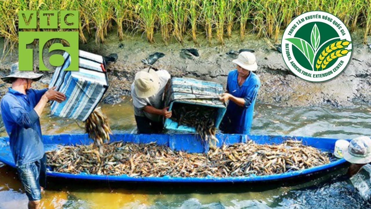 Giải pháp giúp người nuôi thủy sản đối phó với hạn mặn   VTC16