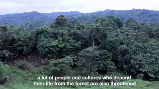Forest Borneo the World