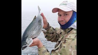 Ловля ЛОСОСЯ троллингом Морская рыбалка как есть