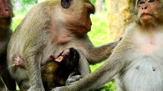 Good Mum Provided Delicious Milk To Baby Jilla