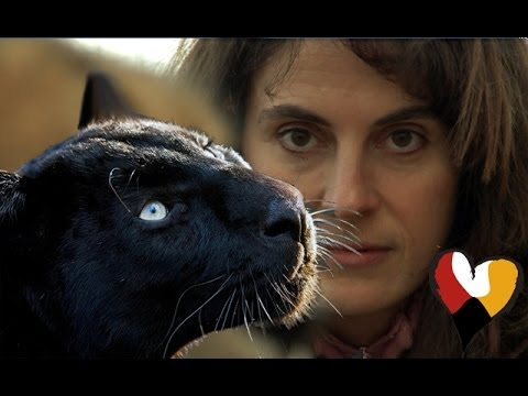 Black Leopard and The Animal Communicator, Anna Breytenbach