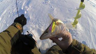 КЛЮЕТ ЛИ СУДАК НА СЛОМЕ ПОГОДЫ Зимняя рыбалка 2021 ловля судака на вибы со льда
