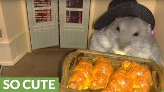 Tiny hamster enjoys tiny baked croissant