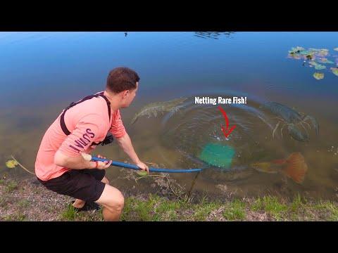 NETTING RARE Fish BEHIND PC MANSION! (FT. PAUL CUFFARO)