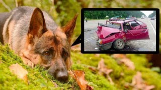 People found this dog in a forest, they were shocked when they learned his story