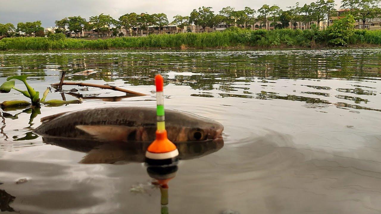 Download Lihat Betapa Banyak Ikan Juga Orang Mancing Ikan Besar Besar - Surga Pemancing Liar #Hp182
