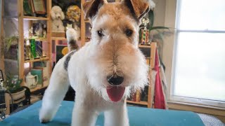 I'd Rather be Causing Mischief  Wire Fox Terrier Groom