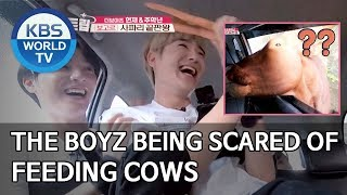 THE BOYZ being scared of feeding cows [Battle Trip/2020.03.15]