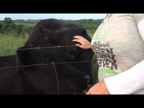 Bull gets excited by being petted