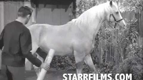 SKATEBOARDING HORSE 8 Wheelier 1965