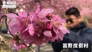 R孟遊台灣|2018 武陵農場 賞櫻去 浪漫在櫻中(中)
