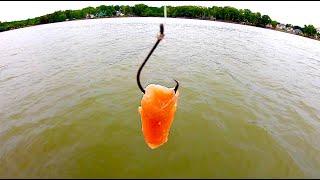 Catfish Bait Challenge - Chicken vs. Cut Bait