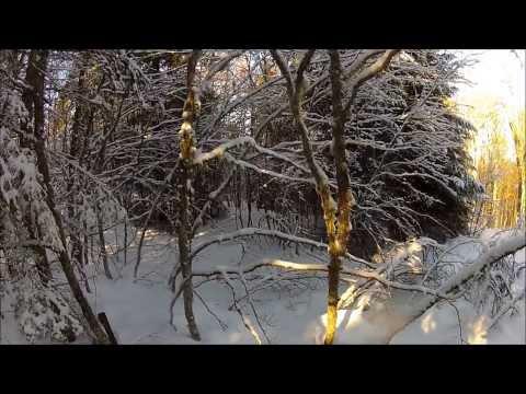Battue Au Sanglier! Tir De Trois Sanglier Dans La Neige!! Wild Boar Hunting, Gopro Hd