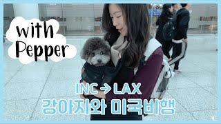 강아지와 미국행 비행기 동방탑승 ✈️ | 인천 엘에이