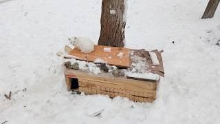 ★ Домики для уличных кошек - реальная помощь бездомным животным