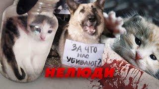КТО РАССЫЛАЕТ ЖИВОДЕРСКИЕ ВИДЕО? // Алексей Казаков