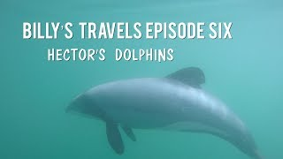 Billy's Travels Episode Six: Hector's Dolphins