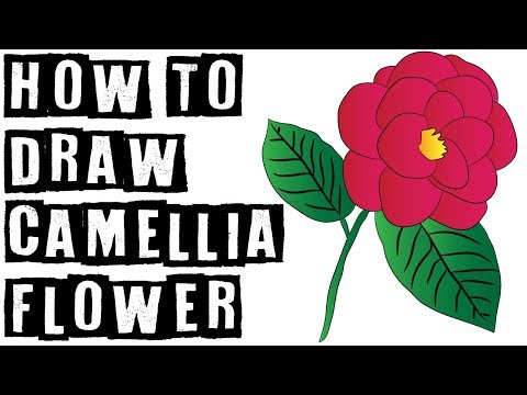 How To Draw Camellia (Camellia japonica) From Alabama Speed Drawing Expert