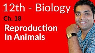 FSc Biology Book 2, Reproduction In Animals - Ch 18 Reproduction - 12th Class Biology